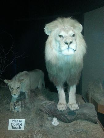 Anniston Museum of Natural History: Exhibit