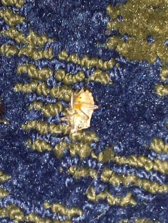 Holiday Inn Express Pittsburgh - Cranberry: Dead bug, I almost stepped on with bare feet, on the floor next to the bed.