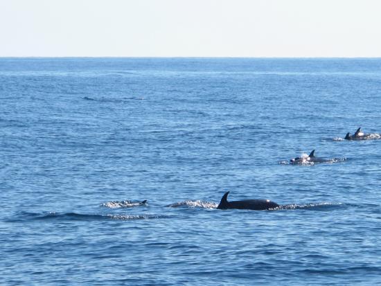 Bibi Fleet Sportfishing: Dolphins Swimming by the Boat