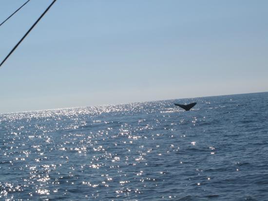 Bibi Fleet Sportfishing: Whale Tail