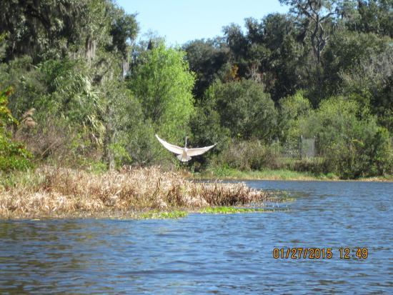 Sanlan RV Park: Bird flying
