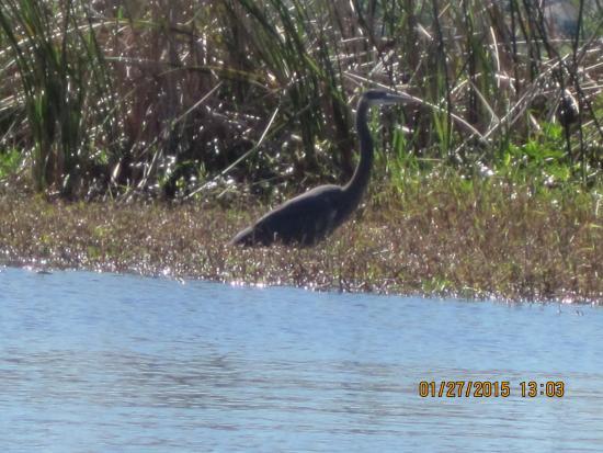 Sanlan RV Park: Black Bird