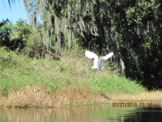 Sanlan RV Park: White bird flying