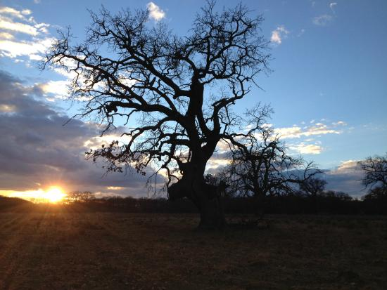 Breite Ancient Oak Tree Reserve: Breite - January 2014