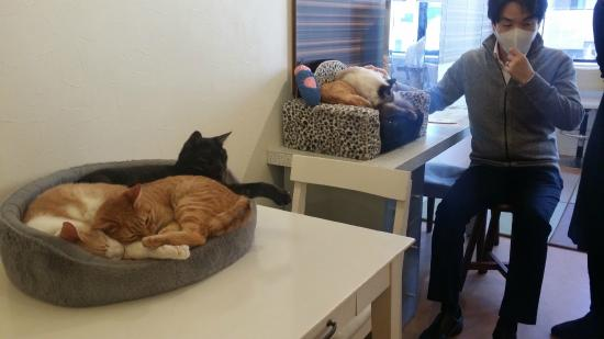 Cat Cafe Nyafe Melange