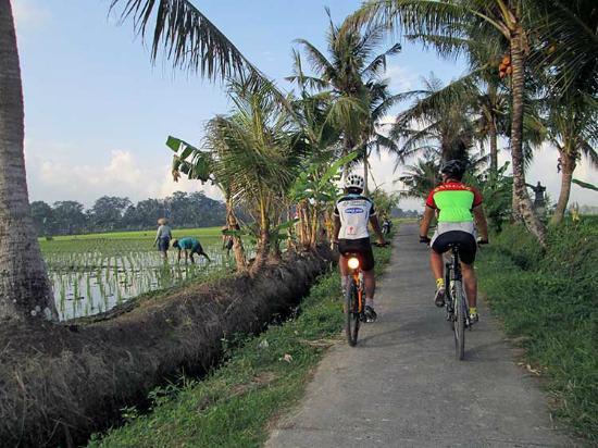 Bali Bike Hire - Pedal Bali