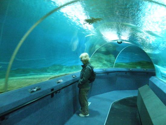 National Aquarium: In the tunnel