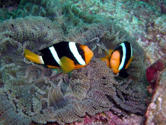 Dive 2 Phuket