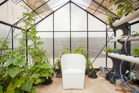 One of a Kind Apartments: One of a Kind Apartment's greenhouse