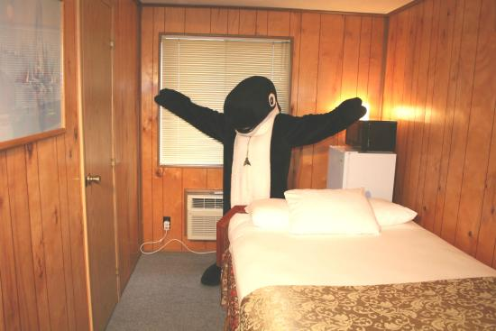 The Orca Inn: Cozy but complete, our Micro Rooms can't be beat!