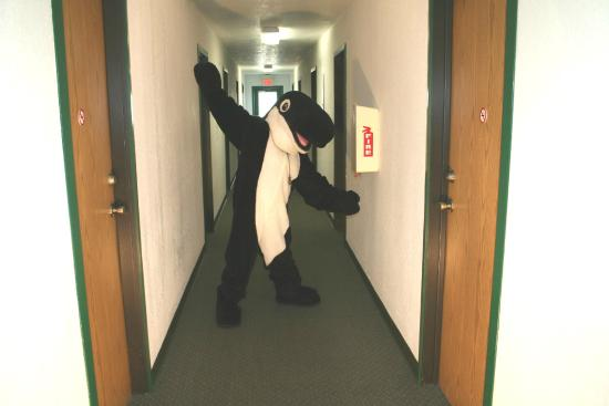 Tilly welcomes you to one of The Orca Inn's 7 buildings!