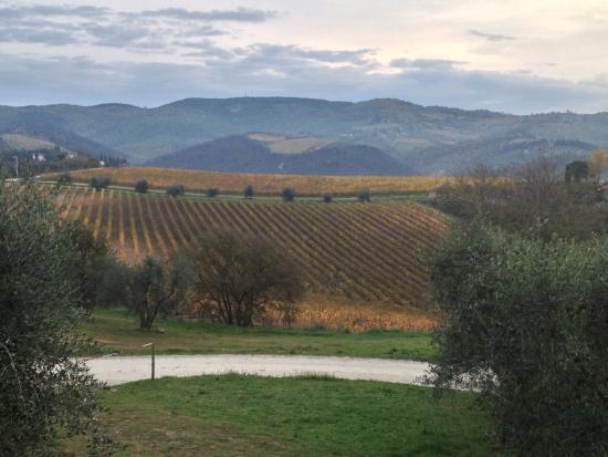 Riserva di Fizzano: le colline del chianti