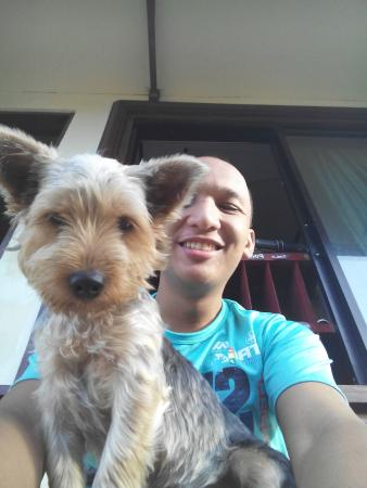 Yokie The Yorkshire Terrier Of The Resort Picture Of Caalan Beach Resort El Nido Tripadvisor