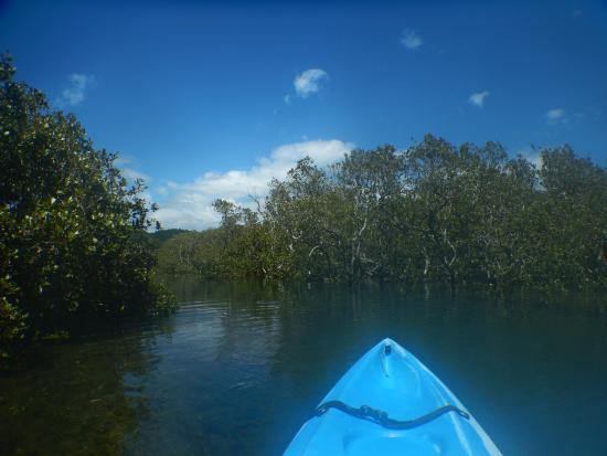 Tutukaka, New Zealand: Kayaking up the river