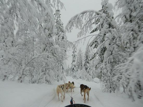 Arctic Husky Farm: Winterwonderland with the husky's