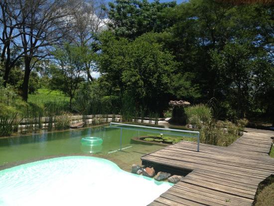 Munga Eco-Lodge : Natural swimming pool