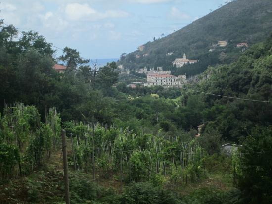 Camping San Michele : Uitzicht vanaf campingplaats