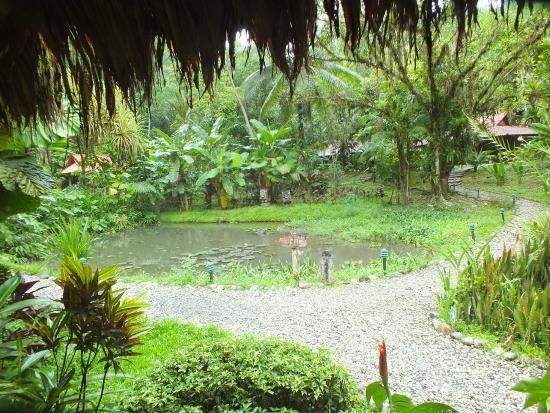 Esquinas Rainforest Lodge: Pond near mian building