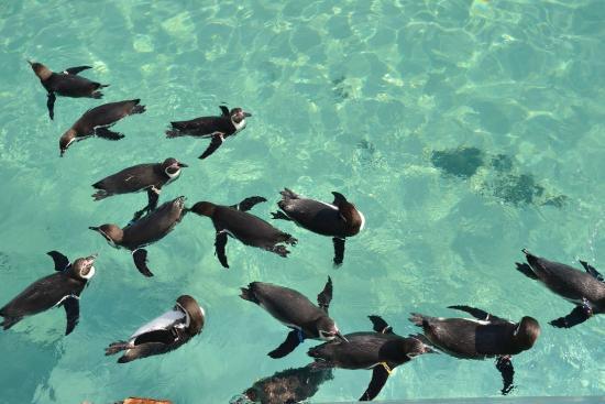 葛西臨海水族園の最後の1匹 ど根性マグロ!頑張れ! - Foto di Tokyo Sea Life Park, Edogawa - TripAdvisor