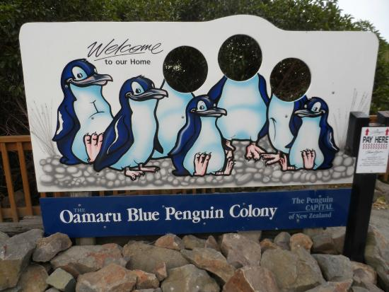 Oamaru Blue Penguin Colony: Blue Penguin Colony