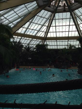 Subtropical Swimming Paradise: Pool