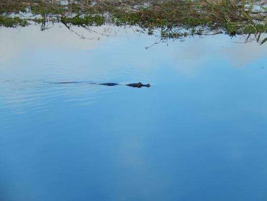 Matogrossense Wetlands National Park : Pantanal matogrossense