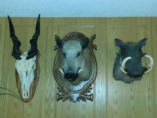 Hotelanlage Starick: more funny taxidermy in the breakfast room