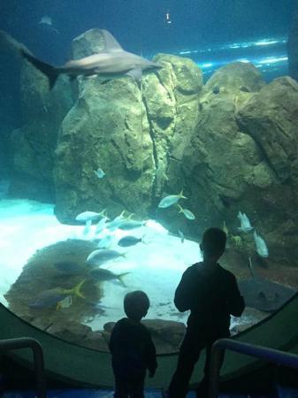 Jellyfish Picture Of Adventure Aquarium Camden