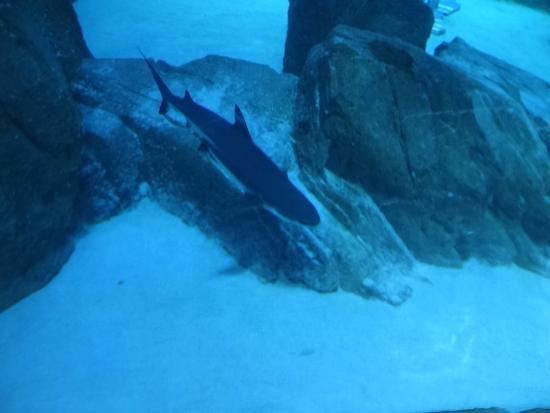 chirurgien jaune picture of aquarium de cineaqua tripadvisor