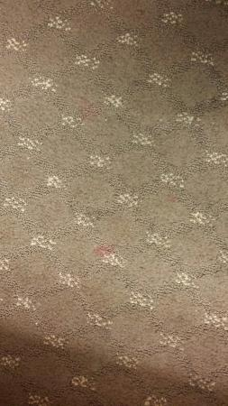 Microtel Inn & Suites by Wyndham Indianapolis Airport: Blood on the carpet.