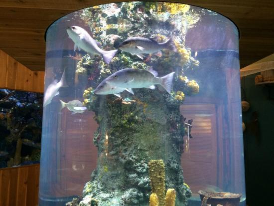 The Loxahatchee River Center: Fish tank