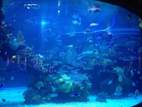 Aquarium picture of bass pro shops outdoor world las for Fish store las vegas