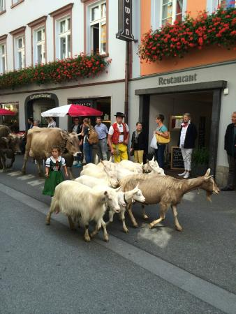 Hotel Appenzell: Procession of the cows