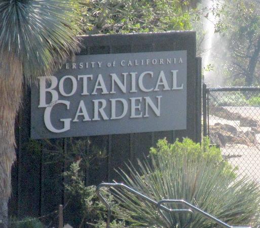 UC Botanical Garden At Berkeley: UC Botanical Garden, UC Berkeley,  Berkeley, Ca