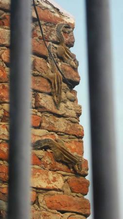 Shanti Lodge: Squirrels outside my window