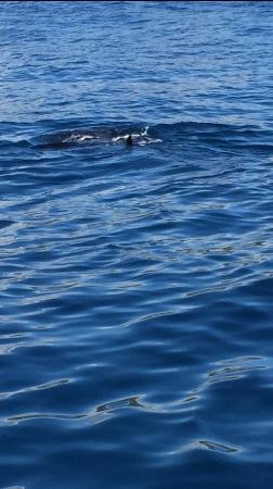 Z Tourz : Whale watch trip1