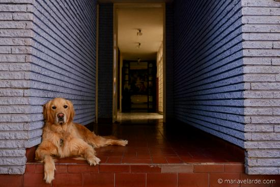 Hostal & Casa de Huespedes Tamayo: Tienen un perro encantador llamado Teo