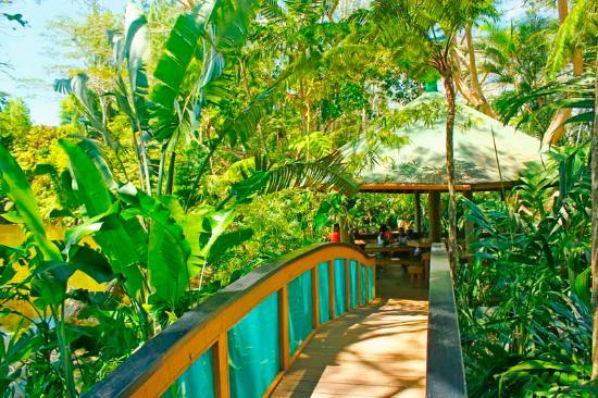 Colo I Suva Rainforest Eco Resort: Our Gazebo