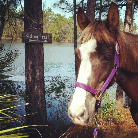Florida Agricultural Museum : Lovely trails