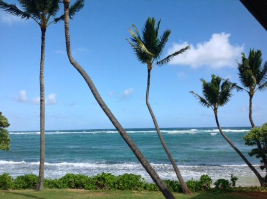 Kauai Kailani : Yes-- My view all day long
