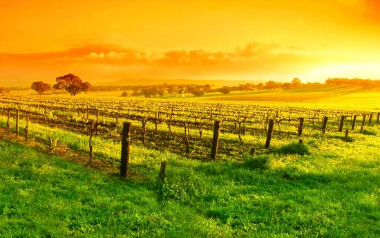 Barossa Valley Wine Tasting Tours: Dawn of a new day in the Barossa Valley
