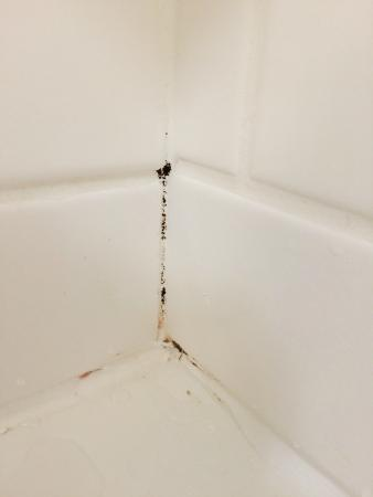 Fairfield Inn & Suites Muskogee: Mold in bathtub/shower