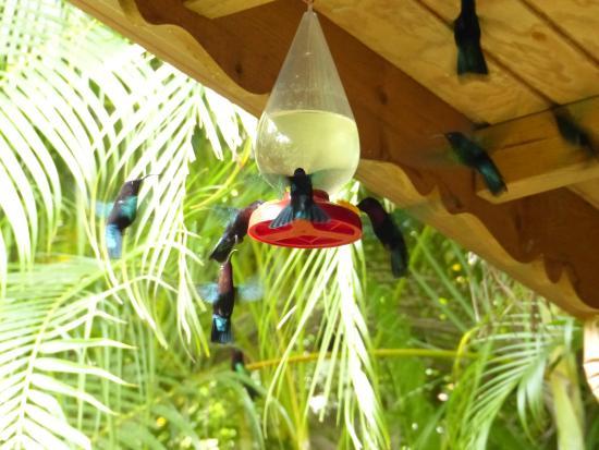 Autour des colibris photo de au jardin des colibris for Au jardin des colibris
