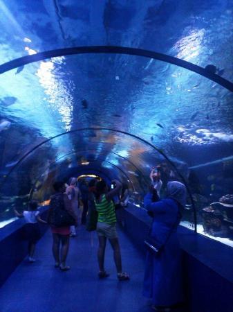 Antalya Akvaryum - Picture of Antalya Aquarium, Antalya ...