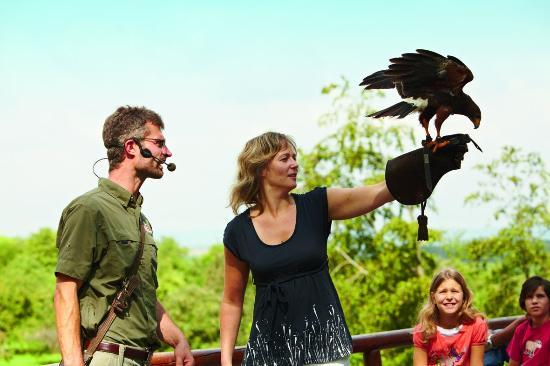 Cleebronn, ألمانيا: Flugvorführung im Wildparadies