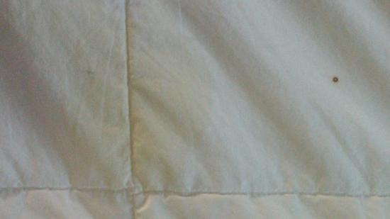 Quality Inn & Conference Center: nice yellow stain on comforter, they were all over!  doesnt the cleaning staff see this?!  gross