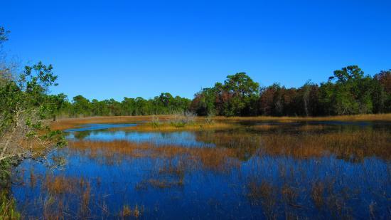 Spruce Bluff Preserve: Inlet Sanctuary