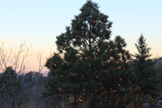 Christmas In Colorado Mountains.Christmas Lights Picture Of Cheyenne Mountain Zoo