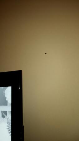 Hilton Garden Inn Huntsville South: One of several bugs during my stay