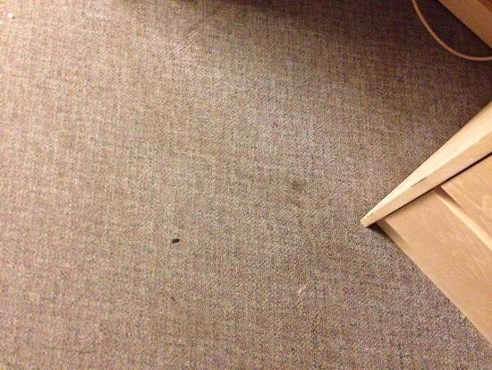Travellers Inn : Carpet and stains everywhere